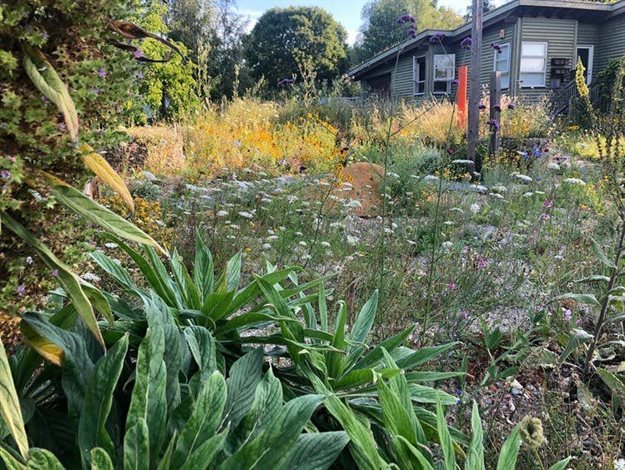 Ecomimicry is used to create a biodiverse and colourful landscape. Source: John Little
